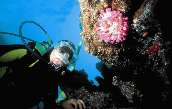 porto santo scuba diving